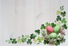 Quadro do narciso com ovos Imagem de Stock
