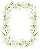 Quadro do retângulo da flor do narciso da aquarela Ilustração tirada mão da grinalda do narciso amarelo isolada no fundo branco imagem de stock royalty free