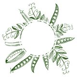 Quadro do vetor com as ervilhas tiradas mão Fotografia de Stock Royalty Free