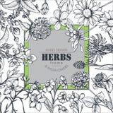 Quadro do vetor com elementos da erva e do wildflower ilustração stock