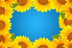 Quadro dos girassóis em um fundo azul Fundo com espaço da cópia Fotos de Stock