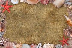 Quadro dos seashells Fotografia de Stock