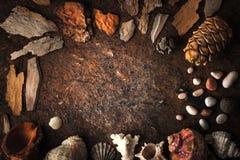 Quadro dos shell, do coral e da pedra no fundo escuro Imagens de Stock Royalty Free