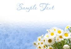 Quadro e beira com margaridas em um fundo azul Imagens de Stock