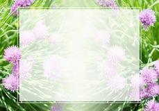 Quadro e beira no fundo da grama e das flores Foto de Stock