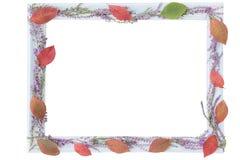 Quadro e flores claros de madeira da urze lilás da floresta e das folhas de outono vermelhas no contorno fotografia de stock