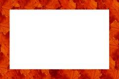 Quadro feito das fileiras das folhas vermelhas Imagem de Stock Royalty Free