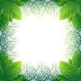 Quadro feito das folhas e das raizes do verde Imagens de Stock Royalty Free
