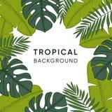 Quadro feito das folhas tropicais tiradas mão da palma, da banana e do monstera Gravando o projeto Ilustrações botânicas Jungl ex Foto de Stock