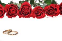Quadro feito das rosas vermelhas fotos de stock