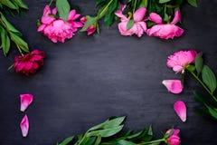 Quadro feito de peônias cor-de-rosa bonitas no fundo preto de madeira Configuração lisa, vista superior Frame floral Quadro das f Foto de Stock