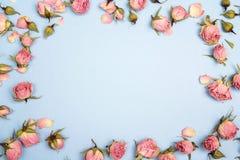 Quadro feito de rosas cor-de-rosa pequenas no fundo azul Lugar para o tex Foto de Stock
