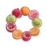 Quadro feito dos frutos, esboço para seu projeto Imagem de Stock Royalty Free