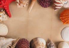 Quadro feito dos shell no papel velho Imagens de Stock