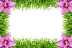 Quadro feito fora da grama com flores do hibiscus Imagem de Stock