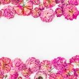 Quadro floral com as rosas cor-de-rosa secadas isoladas no fundo branco, configuração do plano, vista superior Foto de Stock
