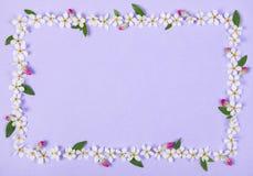 Quadro floral feito das flores brancas da mola, das folhas do verde e dos botões cor-de-rosa no fundo lilás pastel imagem de stock