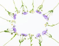 Quadro floral feito das flores do áster e da camomila de campo violetas no fundo branco Vista superior Configuração lisa Fotografia de Stock Royalty Free