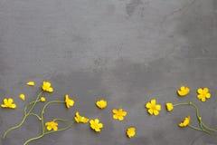 Quadro floral feito dos botões de ouro na pedra Flores amarelas floral Fotos de Stock Royalty Free