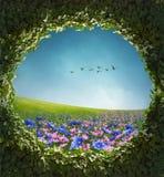 Quadro florescido do campo e da hera Imagens de Stock