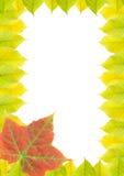 Quadro (folhas de outono) Imagens de Stock Royalty Free