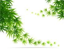 Quadro formado com as folhas da marijuana do cânhamo isoladas no branco Imagens de Stock Royalty Free
