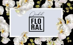 Quadro horizontal da orquídea Fotos de Stock