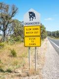 Quadro indicador do diabo tasmaniano foto de stock