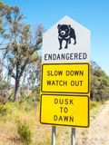 Quadro indicador do diabo tasmaniano imagem de stock royalty free