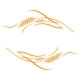 Quadro maduro das orelhas do trigo do ouro, beira ou elemento de canto Imagem de Stock