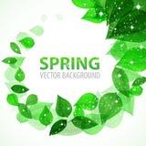 Quadro o ramo com as folhas verdes frescas com sparkles Fotografia de Stock Royalty Free
