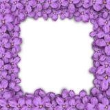 Quadro quadrado de flores lilás Flores roxas Ilustração do vetor Imagem de Stock Royalty Free