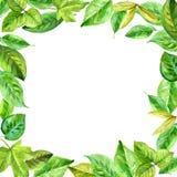 Quadro quadrado feito das várias folhas na aquarela Elementos pintados à mão do projeto Foto de Stock