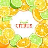 Quadro redondo branco do limão alaranjado do cal Ilustração do cartão do vetor Fundo fresco e suculento tropical dos frutos com l Foto de Stock