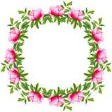 Quadro redondo da flor da peônia da aquarela Grinalda pintado ? m?o isolada no fundo branco Arte finala do design floral para o c ilustração do vetor
