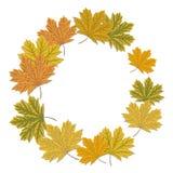 Quadro redondo da folha de bordo Quadro outonal da grinalda com folhas coloridas ilustração do vetor