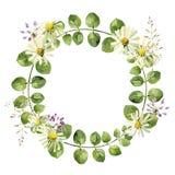 Quadro redondo das folhas e das flores da camomila ilustração stock