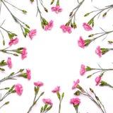 Quadro redondo de flores delicadas Flores cor-de-rosa da mola nos vagabundos brancos Fotografia de Stock