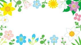 Quadro redondo do fundo colorido do branco dos Wildflowers Fotos de Stock
