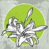 Quadro redondo do vintage com lírios em uma luz - fundo verde Imagens de Stock Royalty Free