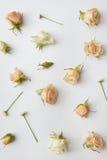Quadro redondo dos botões das rosas Imagem de Stock