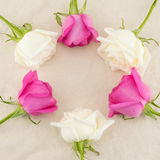 Quadro redondo feito das rosas cor-de-rosa e brancas foto de stock