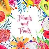 Quadro retangular com frutos exóticos e as flores decorativas Abacate, pitahaya, citrino, abacate, papaia imagens de stock