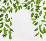 Quadro retangular feito de ramos e das folhas verdes no fundo branco Foto de Stock