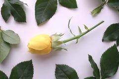 Quadro Rosa amarela Imagens de Stock Royalty Free