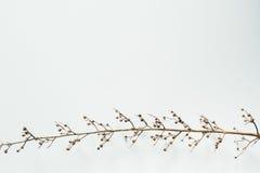 Quadro seco do ramo Imagens de Stock