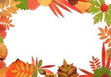 Quadro sua folha do outono foto de stock