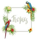 Quadro tropical com papagaios Ilustração Royalty Free