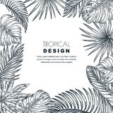 Quadro tropical do quadrado do vetor das folhas de palmeira Esboce a ilustração tirada mão de plantas exóticas da selva Fotos de Stock Royalty Free