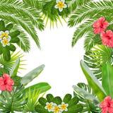 Quadro tropico da floresta da selva Vetor ilustração do vetor